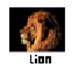 CaptureScreen 官方版 V1.9.4039