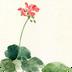 唯美插畫水彩花朵鎖屏 v1.5